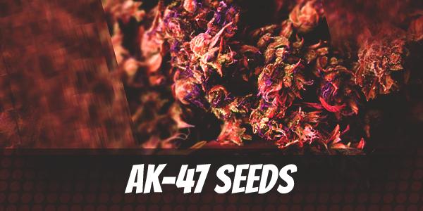 AK-47 Seeds