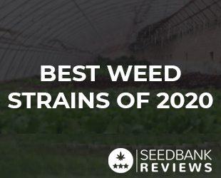 Best Weed Strains of 2020