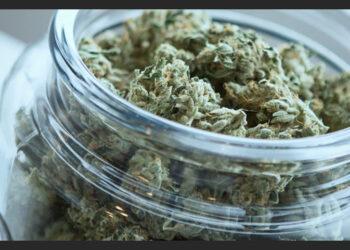 Cannabis Seed Storage