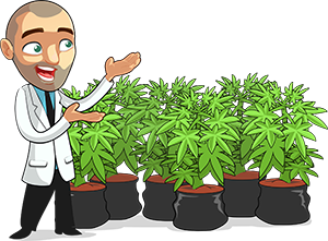 Marijuana Grow Guide