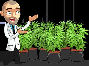 weed grow bible