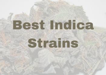 Best-Indica-Strains-Banner