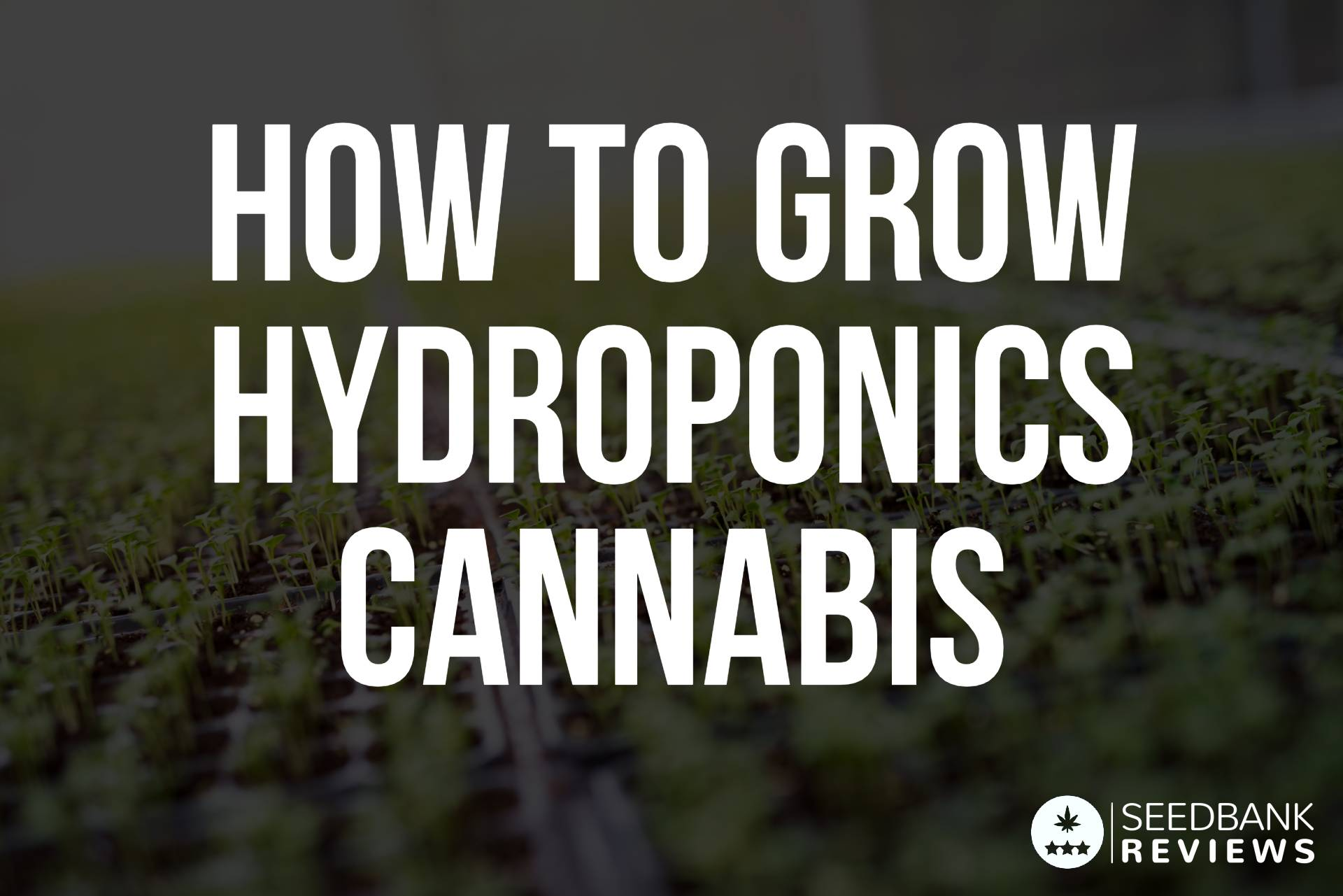 Hydroponics Cannabis