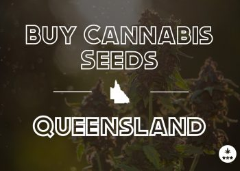 Buy Cannabis Seeds Queensland