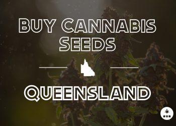 Buy Cannabis Seeds Queensland