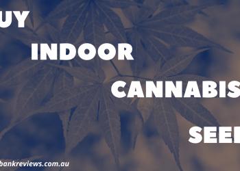 buy-indoor-cannabis-seeds-banner