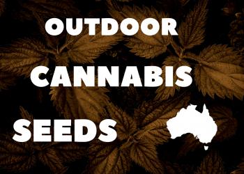 outdoor-cannabis-seeds-banner
