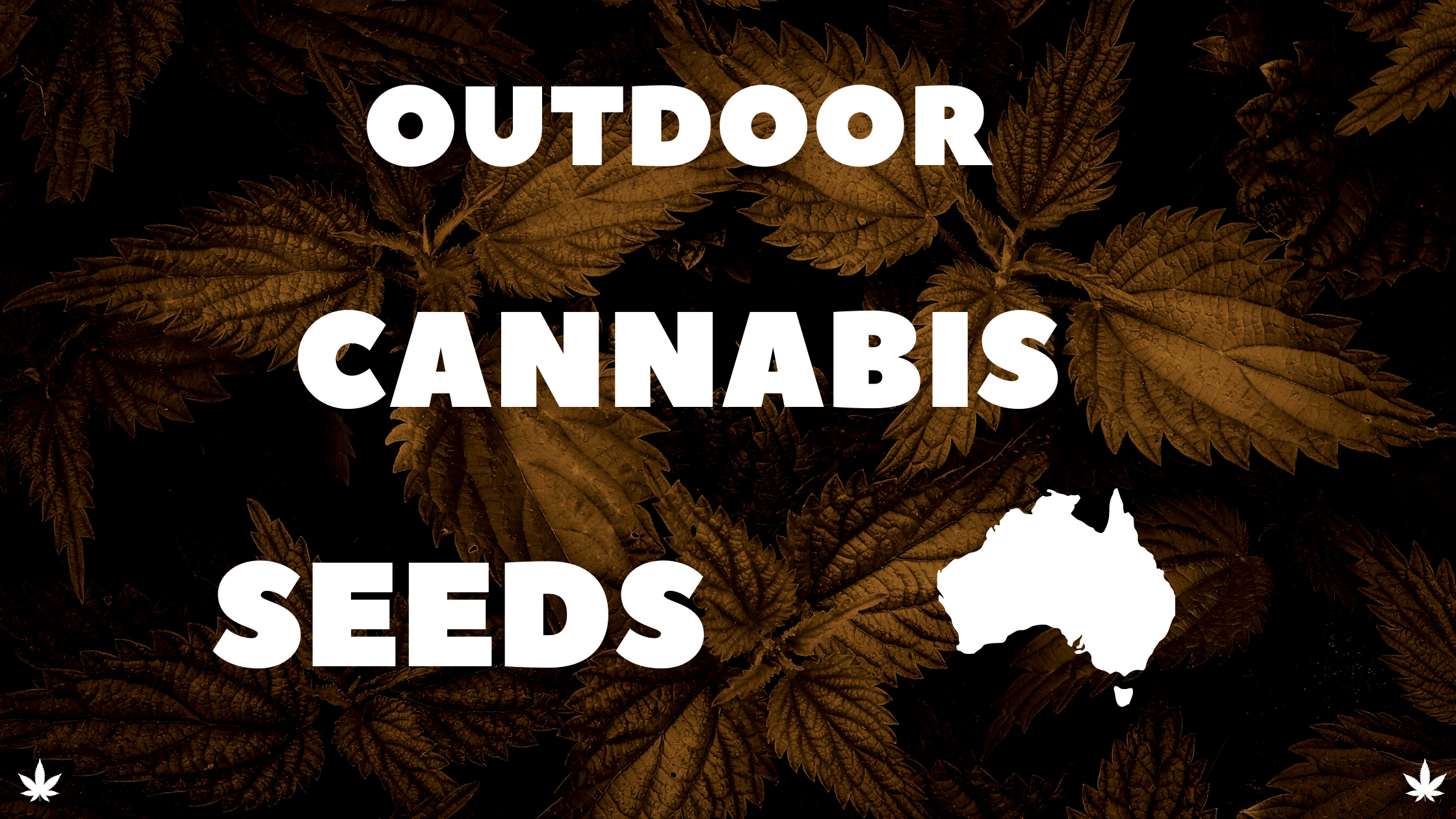 outdoor-cannabis-seeds-banner